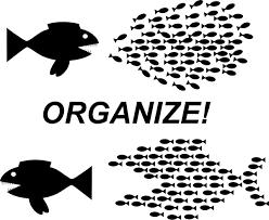 organizing fish